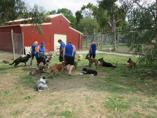 Trainers with dogs at the kennels